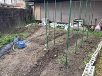 春の菜園づくり4