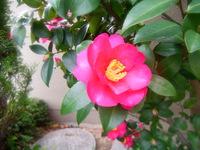 今月おすすめのお花(11月)