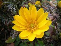 今月のおすすめのお花(2月)