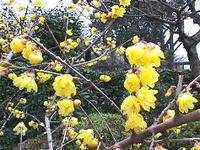 今月おすすめのお花(2月)