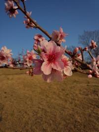 今月おすすめのお花(4月)