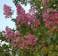 今月のおすすめのお花(8月)