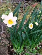 今月おすすめのお花(1月)
