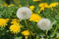 今月のおすすめのお花(3月)