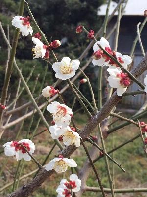 心に花を咲かせる