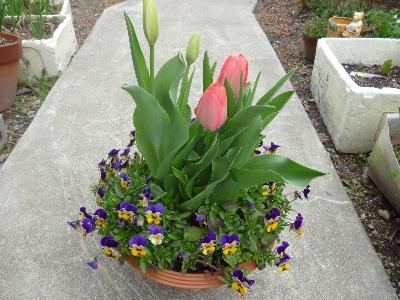 春の庭 2