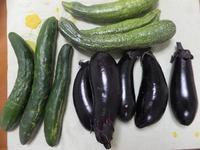 夏野菜が・・・