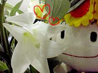 花とおいら