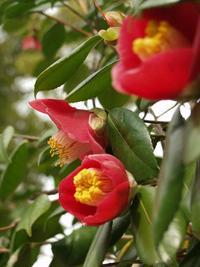1月お勧めの花