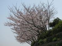 日本の春 第弐章