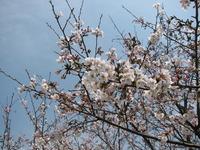 日本の春 第参章