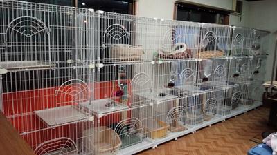 動物保護施設 アニマルランド神崎