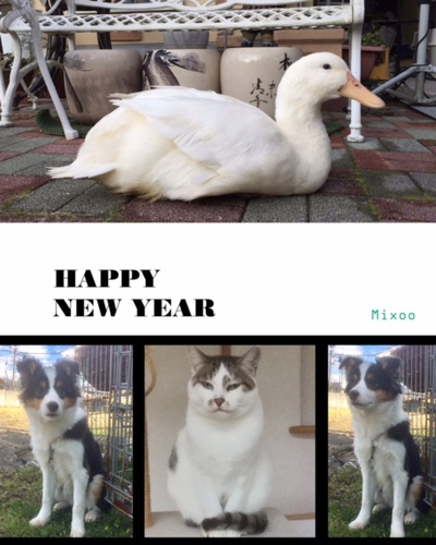 謹賀新年2017年