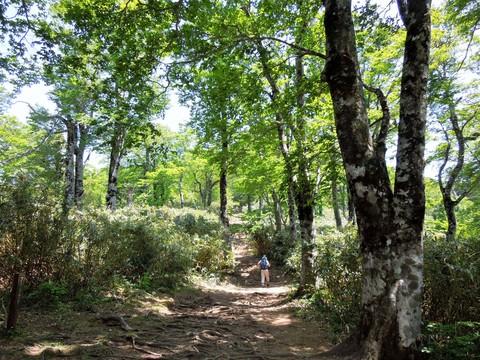 ブナ林の尾根