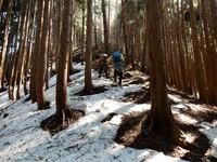 竹呂山から三室山県境尾根を周回