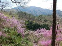 みづめ桜から樽見の大桜まで縦走