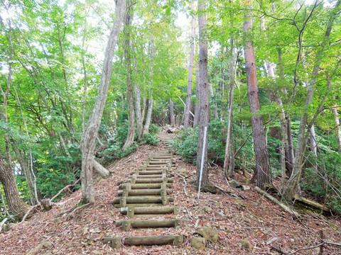 自然林の道