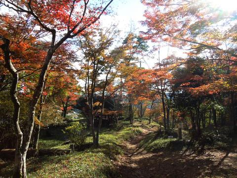 笹の丸城址の紅葉