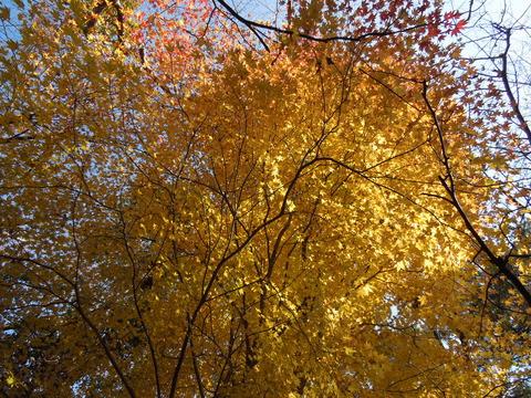 クサイソ山の紅葉