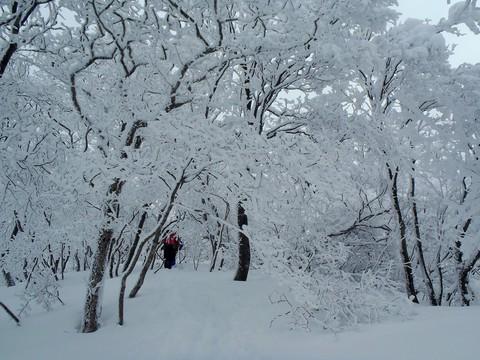 武奈ヶ岳の霧氷