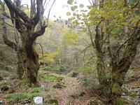 黄葉の蘇武岳