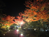 好古園の紅葉 姫路城西御屋敷跡庭園