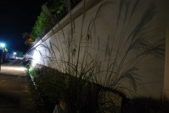姫路城西御屋敷跡庭園 好古園の紅葉