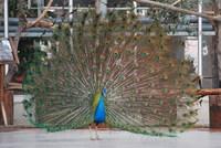 鳥類 図鑑