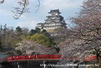 姫路城 さくらおすすめスポット4月2日