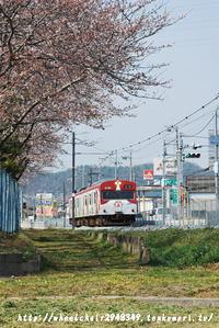 桜と「銀の馬車道」ラッピング電車