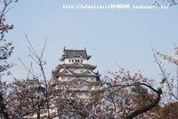 姫路城 4月5日桜開花情報