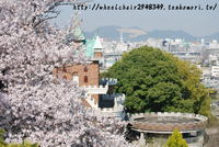 手柄山の桜