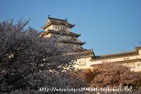 姫路城 4月11日桜開花情報