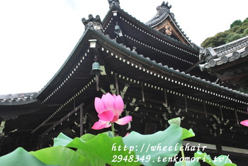 京都の花寺 三室戸寺