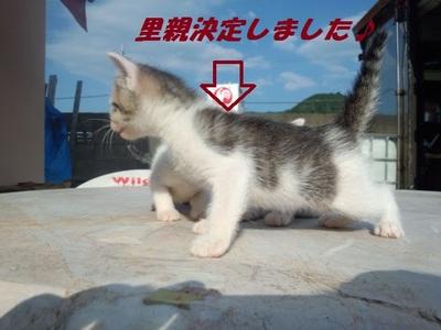 可愛い子猫♪里親募集♪