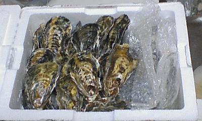 産地直送の生牡蠣