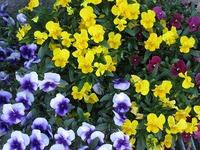 この季節はお花きれいですね~