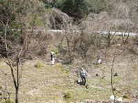 「犬塚」周辺清掃活動