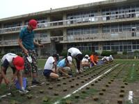 矢野小グラウンドの「芝生」の植替え