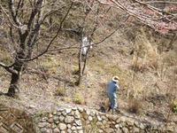 「犬塚」周辺の清掃活動(報告)