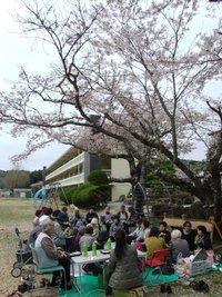 矢野小学校でお花見