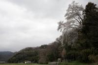 桜のある風景1- 矢野町上・天満神社