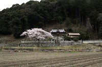 桜のある風景2-能下、金坂、瓜生