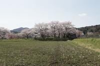 桜のある風景5-二木公園