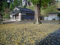 安積八幡神社のイチョウ