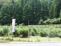 波賀町 ブルーベリー農園