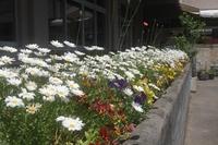 「いぶき」の花壇