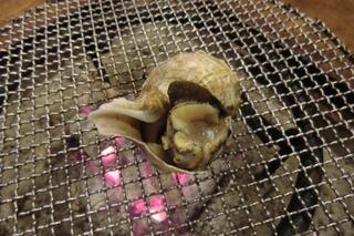 「一家言」から旬物の紹介その⑨「つぶ貝」