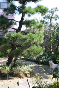 事件です~シロコが・・・松の木に!?