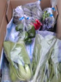 秋野菜の出荷